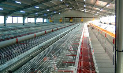 Разведение кроликов как бизнес: организуем ферму. Бизнес с нуля по выращиванию кроликов
